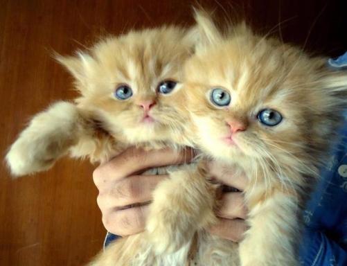 cute-twin